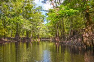 Olustee Creek