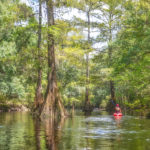 Paddling the Santa Fe River at Oleno