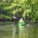 Paddling under a Bald Cypress