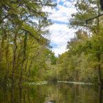 Durbin Creek Landscape