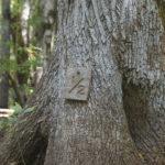 Durbin Creek Mileage Marker
