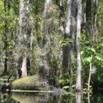 Durbin Creek Tillandsia
