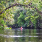 Paddling the Ocklawaha River