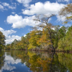 Fall on the Withlacoochee River