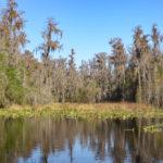 Gator Cove - Billy's Lake