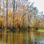 An Orange Ichetucknee River