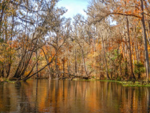 Autumn on the Ichetucknee River