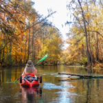 Fall Paddle on the Ichetucknee River
