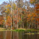 Fall on the Ichetucknee River