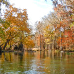 Ichetucknee River Autumn colors