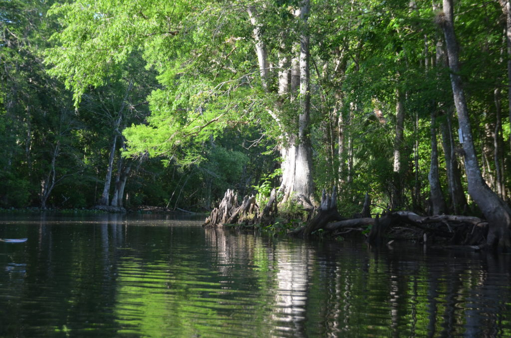 A bend in the upper Ocklawaha River
