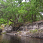 Eroded Bank on Upper Ocklawaha River