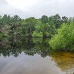 The Ocklawaha River at Moss Bluff